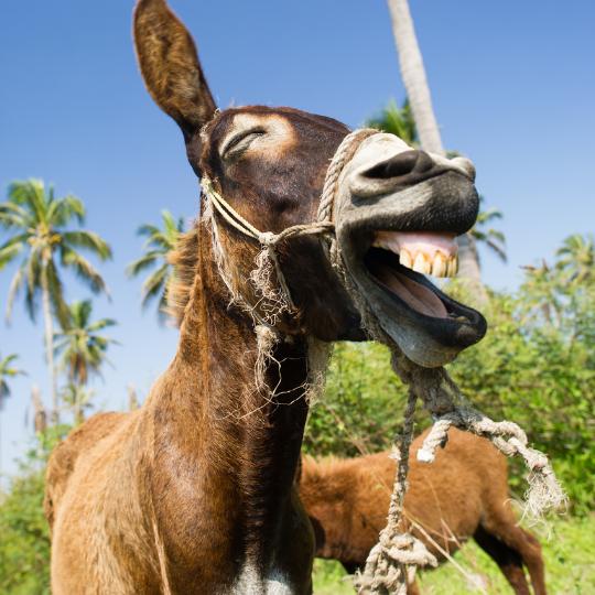 ESTJ ISFJ Relationship: A donkey